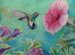 Color pencil drawing of hummingbird drinking nectar from a big red flower