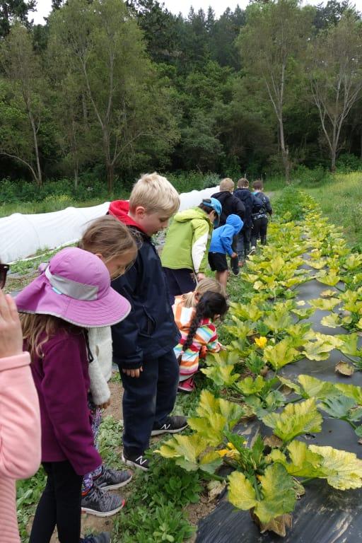 Field Trips Outdoor Ed Global Travel Woodland School