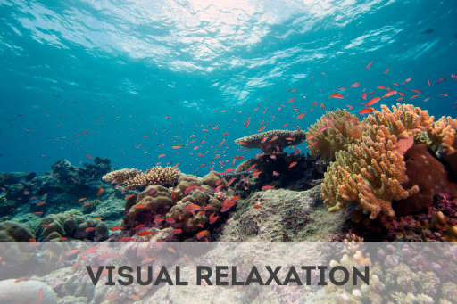 Click here to access visual relaxation tools.