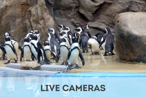 Click here to access live cameras