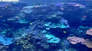 Indo-Pacific Barrier Reef