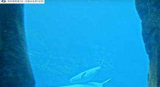 Beluga Whale Cam